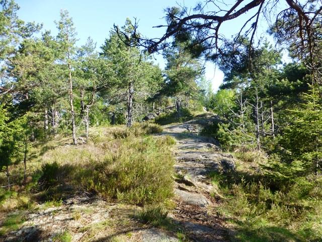 Fin sti_foto Olav Engenjpg